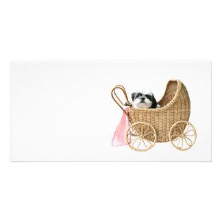 Shih Tzu baby buggy Custom Photo Card