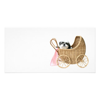 Shih Tzu baby buggy Photo Card Template