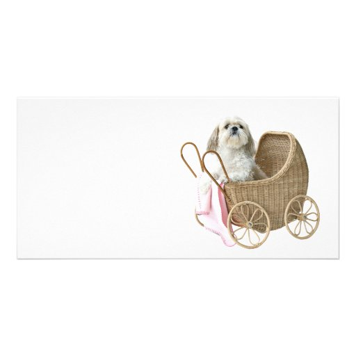 Shih Tzu baby carriage Photo Greeting Card