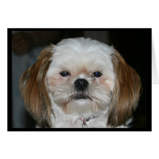 """""""Shih Tzu Better Have A Happy Birthday!"""" Card"""