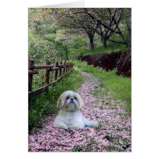 Shih Tzu Card Purple Flowers