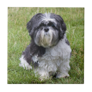 Shih Tzu dog beautiful cute photo tile or trivet