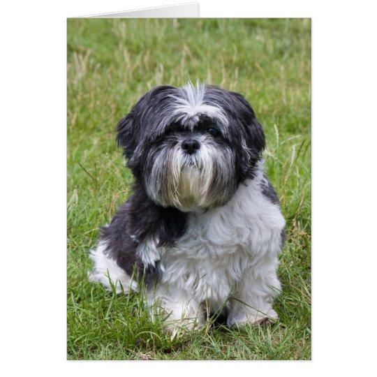 Shih Tzu dog cute blank note card, greeting card