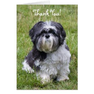 Shih Tzu dog cute photo thank you card