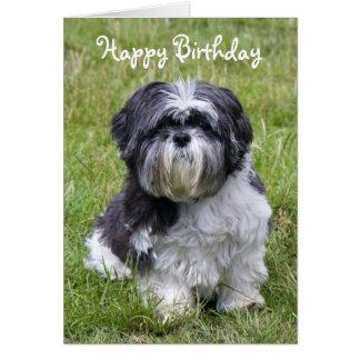 Shih Tzu dog happy birthday greeting card
