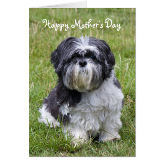 Shih Tzu dog happy mother's day greeting card
