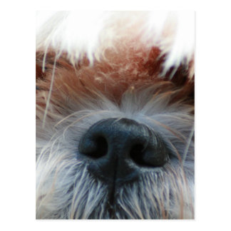 shih tzu dog puppy cute face picture gifts post cards