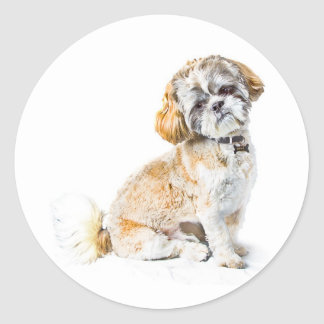 Shih Tzu Dog Stickers