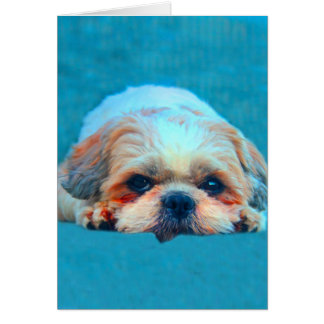 Shih Tzu Dog Water color art Portrait Card