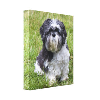 Shih Tzu dogcute  beautiful wrapped canvas print