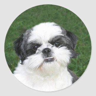 Shih Tzu face sticker