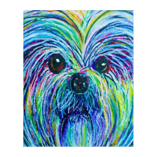 Shih Tzu Intense Colors Acrylic Print