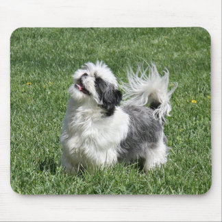 shih tzu playing mouse pad