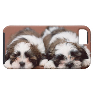Shih Tzu Puppies iPhone 5 Case
