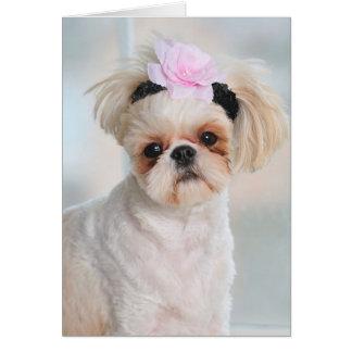 Shih Tzu Puppy Card