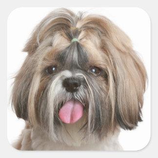 Shih Tzu Puppy Dog Greeting Stickers