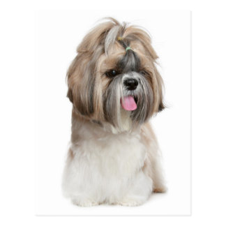 Shih Tzu Puppy Dog - Love, Hello, Thinking Of You Postcard