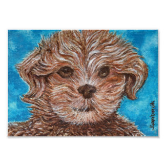 Shih Tzu Puppy Dog Print