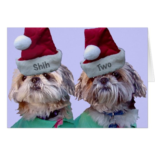 Shih Tzu -Shih Two Card