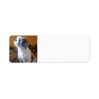 Shih_Tzu sitting.png Return Address Label