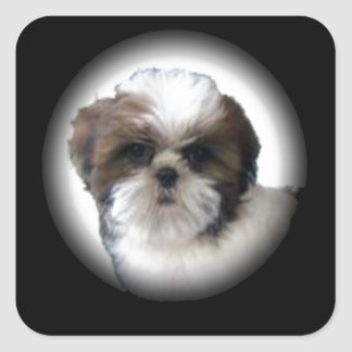 Shih-Tzu Square Sticker