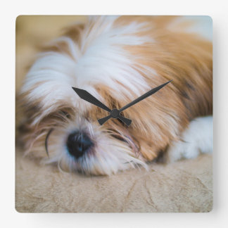 Shih Tzu Square Wall Clock