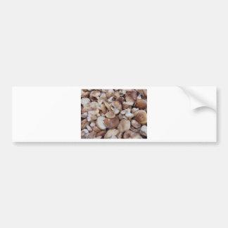 Shiitake Mushrooms Bumper Sticker