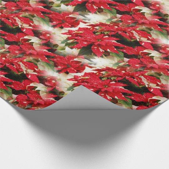 Shimmer Surprise Poinsettias