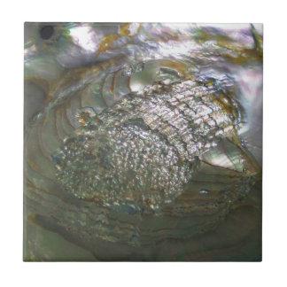 Shimmering Abalone Seashell, Beautiful Nature Ceramic Tiles