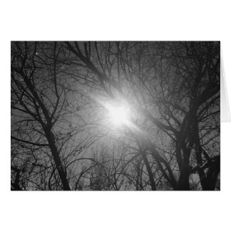 Shine Through - noir, card