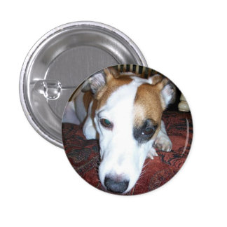 Shiner is bored 1 inch round button