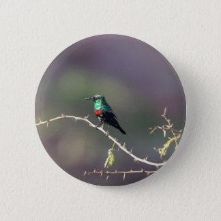 Shining Sunbird (Cinnyris habessinicus) 2 Inch Round Button