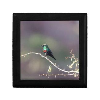 Shining Sunbird (Cinnyris habessinicus) Gift Box