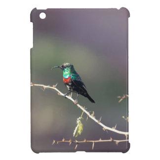 Shining Sunbird (Cinnyris habessinicus) iPad Mini Case