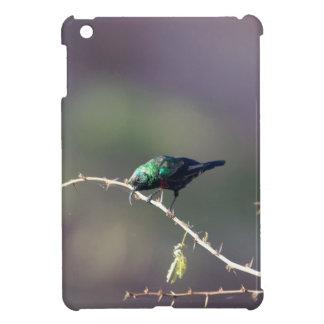 Shining Sunbird (Cinnyris habessinicus) iPad Mini Cases
