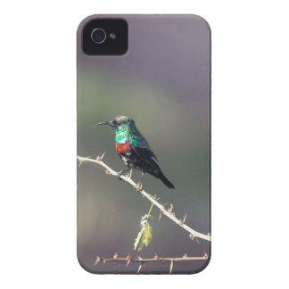 Shining Sunbird (Cinnyris habessinicus) iPhone 4 Case-Mate Case