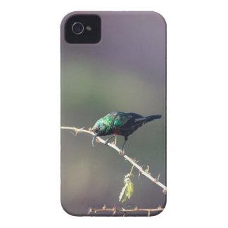 Shining Sunbird (Cinnyris habessinicus) iPhone 4 Cover