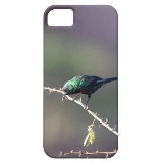 Shining Sunbird (Cinnyris habessinicus) iPhone 5 Case