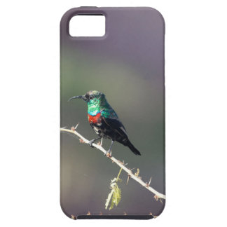 Shining Sunbird (Cinnyris habessinicus) iPhone 5 Covers