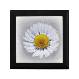shining white daisy gift box