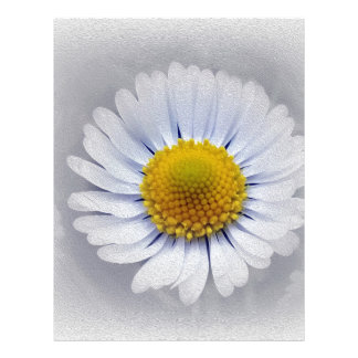 shining white daisy letterhead
