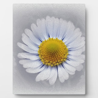 shining white daisy plaque