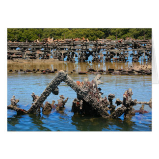 Shipwreck in the mangroves card