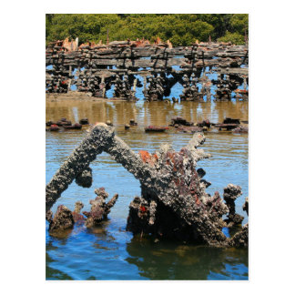 Shipwreck in the mangroves postcard
