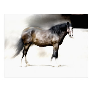 SHIRE HORSE STUDY POSTCARD