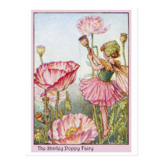 Shirley Poppy  Fairy Postcard