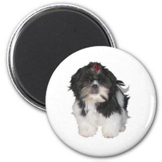 Shitzu Shih Tzu Puppy Dogs 2 Inch Round Magnet