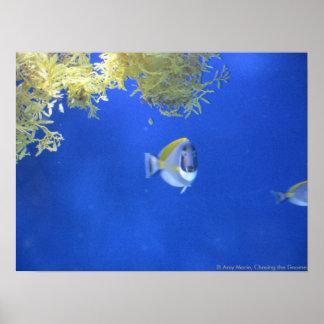 Shocked Fish Poster