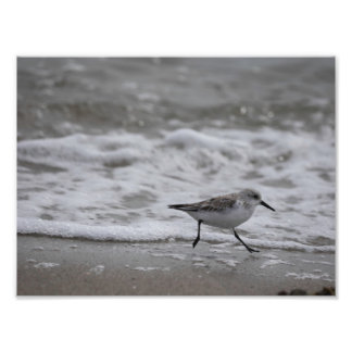 Shore Bird 001 Photo Print