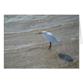 Shore bird notecard